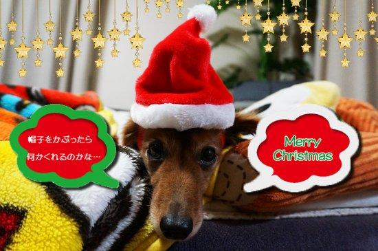 我が家のワンちゃんもメリークリスマス♪