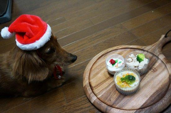 我が家のワンちゃんもメリークリスマス♪【画像12】