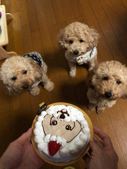 我が家のワンちゃんもメリークリスマス♪【画像15】