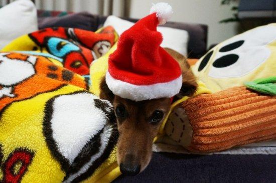 我が家のワンちゃんもメリークリスマス♪【画像3】