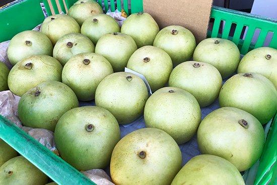 季節を感じさせる旬の果物アイス(梨・ぶどう)【画像8】