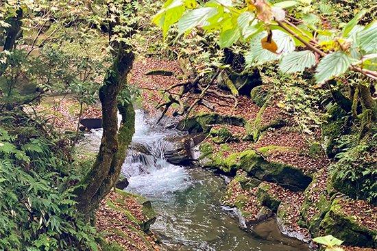 滝百選 猿尾滝で「天使の虹」発見!【画像2】