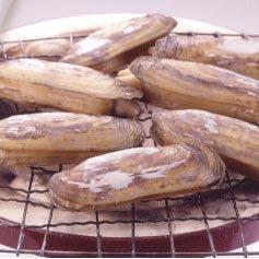 「活・アゲマキ貝」 10本入 ※韓国産 柳川から愛される美味の貝