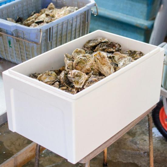 【水産物応援商品・送料無料】岩手県山田湾産 無選別殻付き牡蠣(15kg)