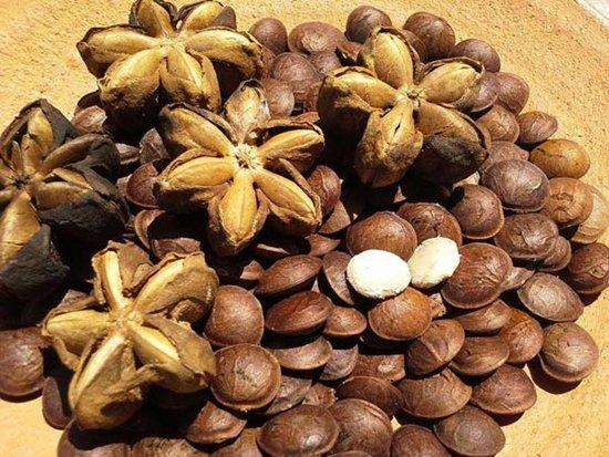 サチャインチ(インカナッツ)の種