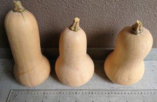 バターナッツかぼちゃ *期間限定商品:〜9月30日まで