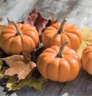 マンチキンかぼちゃの種