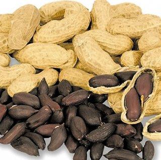 黒落花生(ブラックピーナッツ)の種 *這い性
