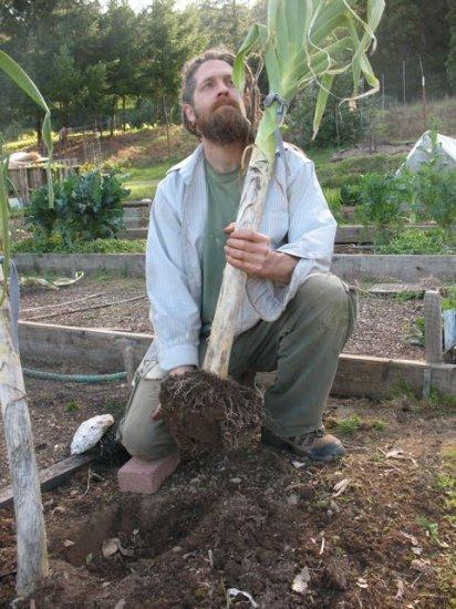 ジャイアントブルガリアンリーキ(西洋ネギ)の種