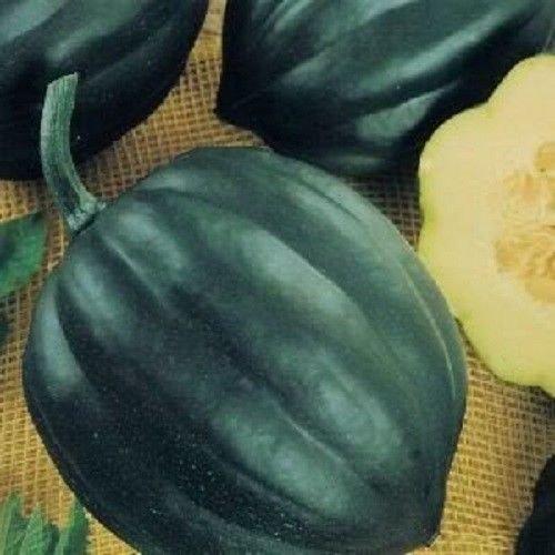 テーブルクイーンかぼちゃの種