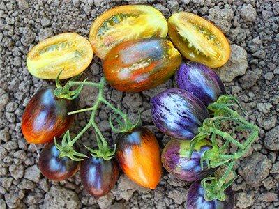 ブラッズアトミックグレープ(トマト)の種