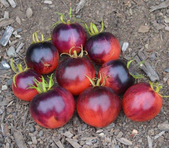 オザークサンセット(トマト)の種