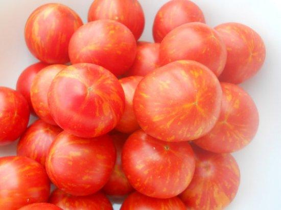 アムールタイガートマトの種