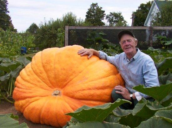 アトランティックジャイアントかぼちゃの種
