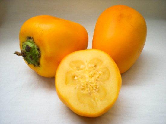 ココナの種