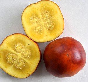 レッドジャイアントココナの種
