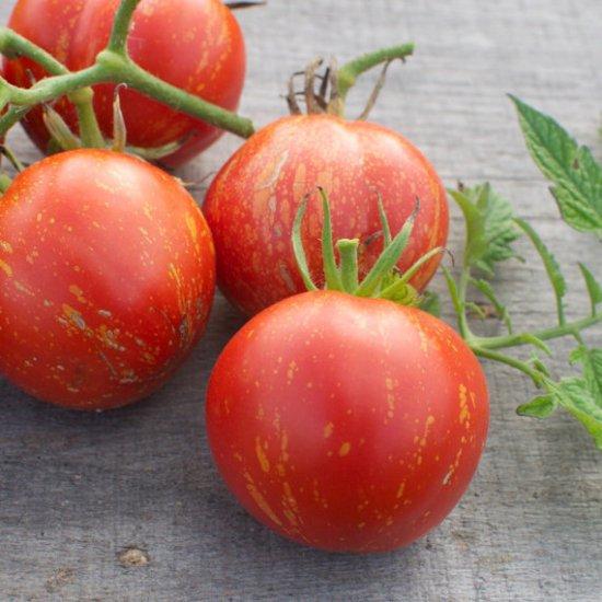 キャスケードラバ(トマト)の種