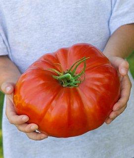ステーキハウスハイブリッドトマトの種