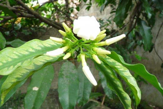 アクアンマの種