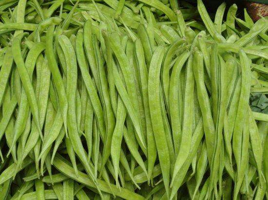 クラスタマメ(グア豆、グアー豆)の種