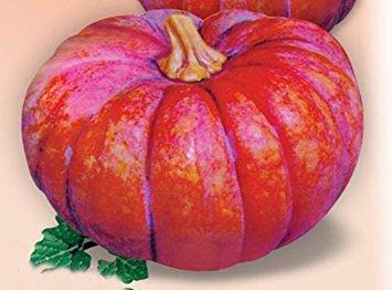 カバズかぼちゃの種