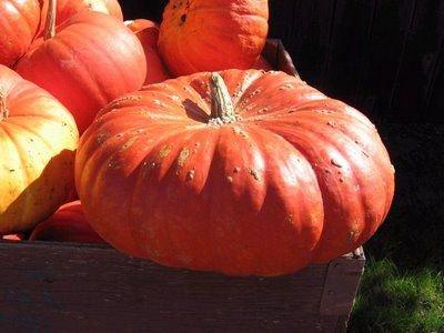 ルージュ・ヴィ・デタンプ(かぼちゃ)の種