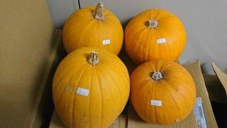 ハロウィンかぼちゃ(オーナメント)