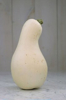 ホワイトクーシャウ(かぼちゃ)の種