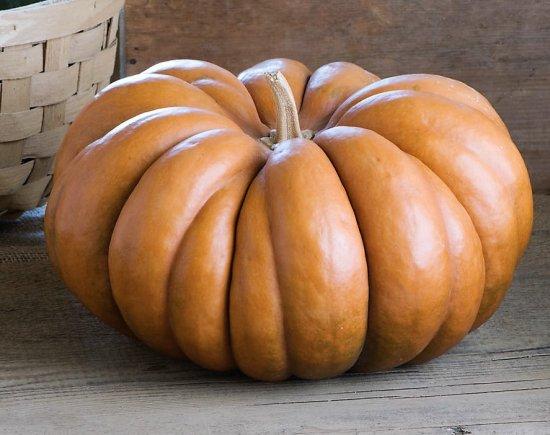 マスキー・ド・プロバンスかぼちゃの種