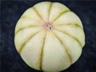 菊メロンの種