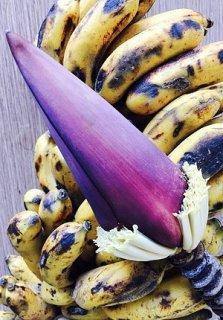 スラウェシバナナの種