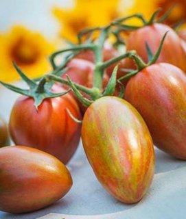 シマーハイブイッドトマトの種 *F1