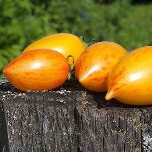 スイートクリームトマトの種