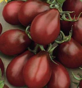 ブラックペアートマトの種