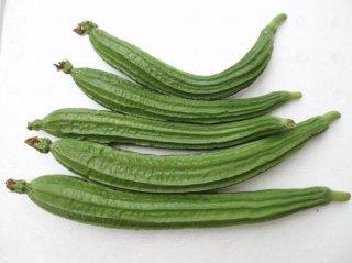十角ヘチマ(トカドヘチマ)の種