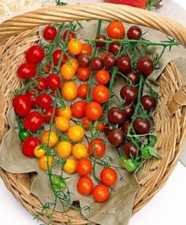ミックスチェリートマトの種