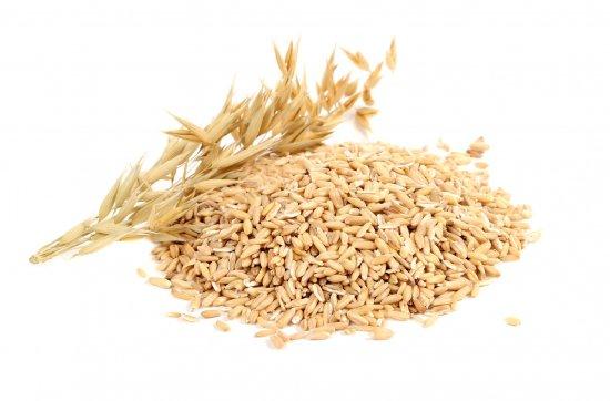 オーツ麦(エンバク)の種