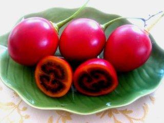 レッドタマリロ(ツリートマト)の種