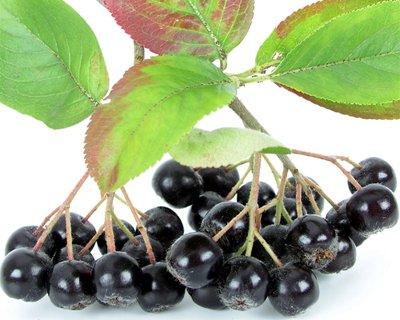 ブラックアロニアベリー(ブラックチョークベリー)の種 *食用