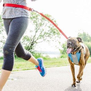 Stunt Puppy 引っ張り抑止ハーネス GO DOG GLO スタントパピー