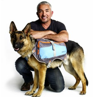 <img class='new_mark_img1' src='https://img.shop-pro.jp/img/new/icons20.gif' style='border:none;display:inline;margin:0px;padding:0px;width:auto;' />Cesar Millan バックパックSサイズ シーザーミラン 【旧アイテム】