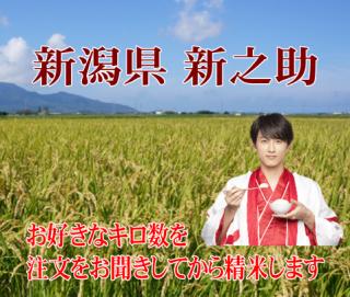 29年度産 新潟県新之助 1kg