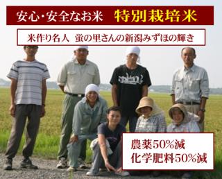 30年度産 蛍の里さんの 特別栽培米 新潟みずほの輝き(農薬50%減・化学肥料50%減)1kg