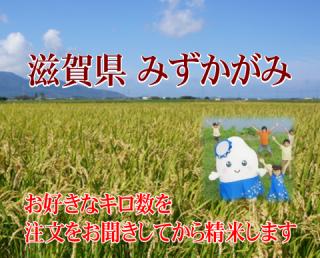 令和元年度産 特別栽培米 滋賀みずかがみ(農薬50%減・化学肥料50%減)1kg