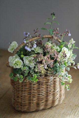 【自分で植える花苗セット】ペチュニアとポレモニウム