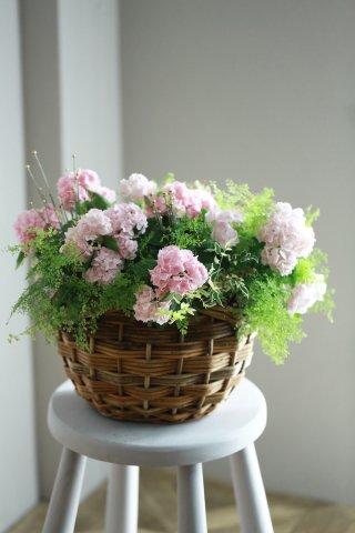 【自分で植える花苗セット】アジサイイヨシシテマリとアジアンタムのブリコラージュ