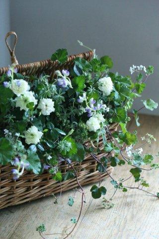 【自分で植える花苗セット】ブルーベリーとミニバラグリーンアイス