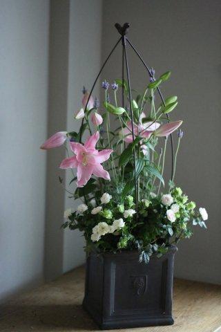 【自分で植える花苗セット】オリエンタルリリーとミニバラ