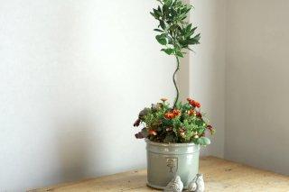 【1点もの】月桂樹とクランベリー&ストロベリーブロンズの寄せ植え