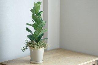 【1点もの】バンビーノの鉢植え(にょきっち人形付き)[A]